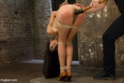 Hogtied torrent